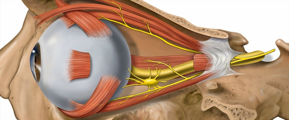 Occhiox.com - Anatomia